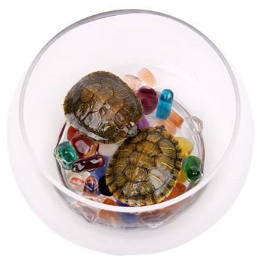 富贵发财龟套装(发财龟2只 饲料一包 彩色石子一包 小